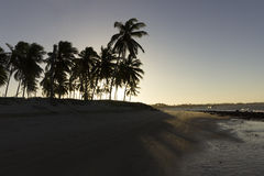 Coconut palm trees - Sunset on the beach, RN, Brazil. A beautiful moment in my vacation in Natal, RN, Brazil Stock Image