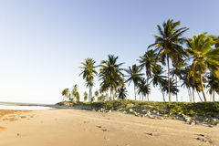 Coconut palm trees - Sunset on the beach, RN, Brazil. A beautiful moment in my vacation in Natal, RN, Brazil Royalty Free Stock Photos