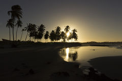Coconut palm trees - Sunset on the beach, RN, Brazil Royalty Free Stock Image