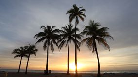 Coconut palm trees at sunset. Florida, United States stock video