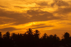 Coconut palm trees at sunset Stock Images