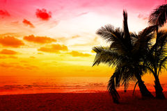 Coconut palm trees in sunset Royalty Free Stock Photography