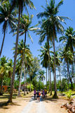 Coconut palm trees in Thailand Stock Image