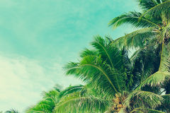 Coconut palm trees tropical background, vintage Royalty Free Stock Photos