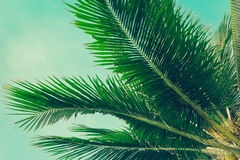 Coconut palm trees tropical background, vintage Royalty Free Stock Images