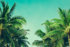 Coconut palm trees tropical background, vintage Stock Photos