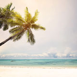 Coconut palm trees at tropical beach coast in summer, Royalty Free Stock Photography