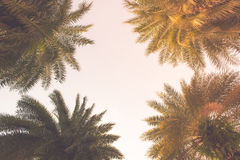 Coconut palm trees in tropical beach Thailand.  Royalty Free Stock Photo
