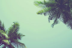 Coconut palm trees at tropical beach vintage filter Royalty Free Stock Image