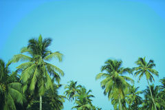 Coconut palm trees at tropical beach vintage filter Royalty Free Stock Images