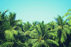 Coconut palm trees at tropical beach vintage filter Royalty Free Stock Photography