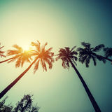 Coconut palm trees at tropical coast with vintage toned and film Royalty Free Stock Photos