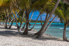 Coconut palm trees on the tropical island Saona, Dominican Republic.  Royalty Free Stock Image