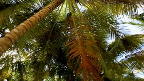 Coconut palm trees on a tropical island. Scroll around. stock video