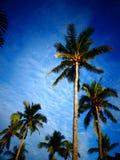 Coconut Palm Trees. Tropical coconut palms against a blue sky stock photos