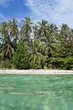 Coconut palm trees and turquoise waters Royalty Free Stock Photo