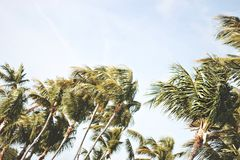 Coconut Palm Trees Under Grey Sky during Daytime Stock Photos