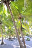 Coconut palm trees white sand tropical paradise Stock Photos