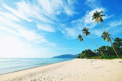 Coconut Palm trees on white sandy beach. The Coconut Palm trees on white sandy beach Stock Images