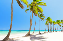 Coconut Palm trees on white sandy beach in Cap Cana, Dominican R Stock Photos