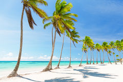 Coconut Palm trees on white sandy beach Stock Images