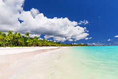 Coconut Palm trees on white sandy beach in Caribbean sea, Saona Royalty Free Stock Photos