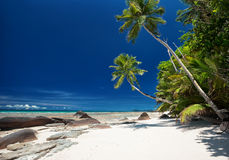 Coconut palm trees on the white sandy beach Royalty Free Stock Photography