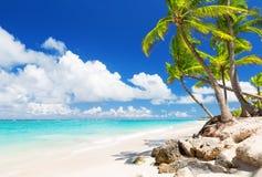 Coconut Palm trees on white sandy beach Stock Photos