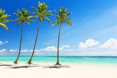 Coconut Palm trees on white sandy beach Royalty Free Stock Image