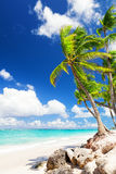 Coconut Palm trees on white sandy beach Stock Photography