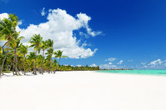 Coconut Palm trees on white sandy beach in Punta Cana, Dominican Stock Photos
