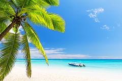 Coconut Palm trees on white sandy beach Royalty Free Stock Photos