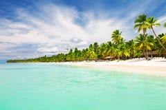 Coconut Palm trees on white sandy beach Stock Photo