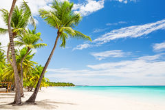 Coconut Palm trees on white sandy beach Royalty Free Stock Photography