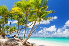 Coconut Palm trees on white sandy beach Stock Image