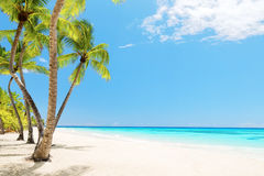 Coconut Palm trees on white sandy beach Royalty Free Stock Photo