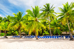 Coconut Palm trees on white sandy beach Stock Photos