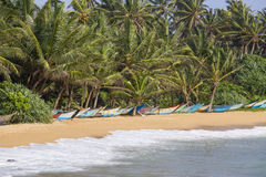 Coconut palm trees and wooden boats on the sand beach Royalty Free Stock Photo