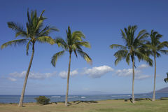 Coconut palm tress along the b Stock Images