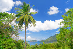 Coconut palm and tropical bay Stock Photo