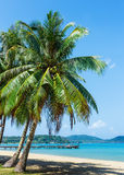 Coconut palm on a tropical beach Stock Photo