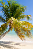 Coconut palm on tropical beach, squared frame Royalty Free Stock Image