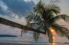 Coconut palm in the tropical island beach Stock Images