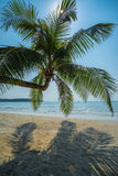 Coconut palm in the tropical island beach Royalty Free Stock Image