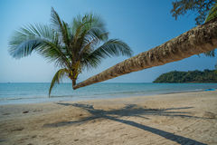 Coconut palm in the tropical island beach Stock Photo