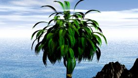 Coconut palm by tropical ocean Stock Photo