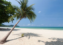Coconut palm with white sand Royalty Free Stock Photos