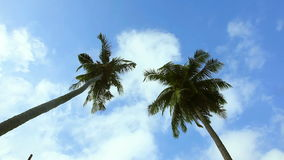 Coconut palm stock footage
