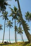 Coconut Palms. On the Balian beach,Bali royalty free stock photo