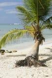 Coconut Palms Royalty Free Stock Photo